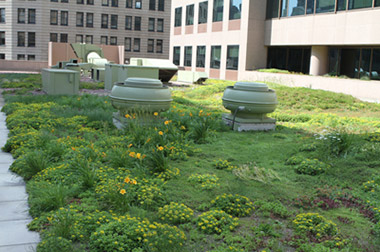 View of our green roof