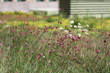different plants on our green roof